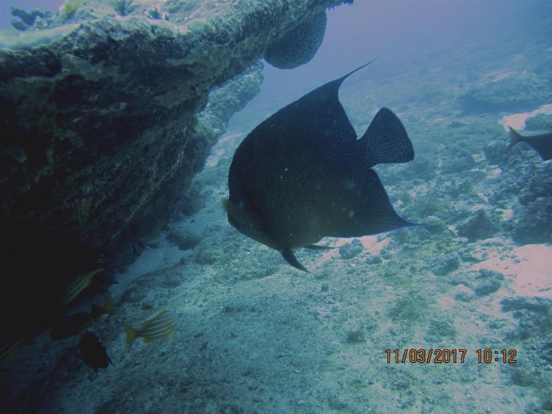 Fish rock 1