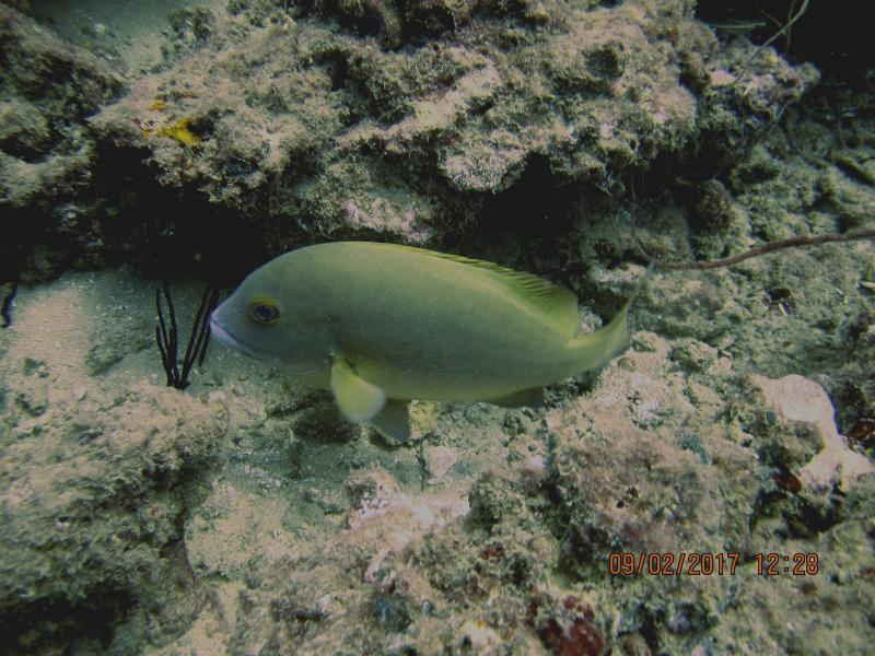 Fish single