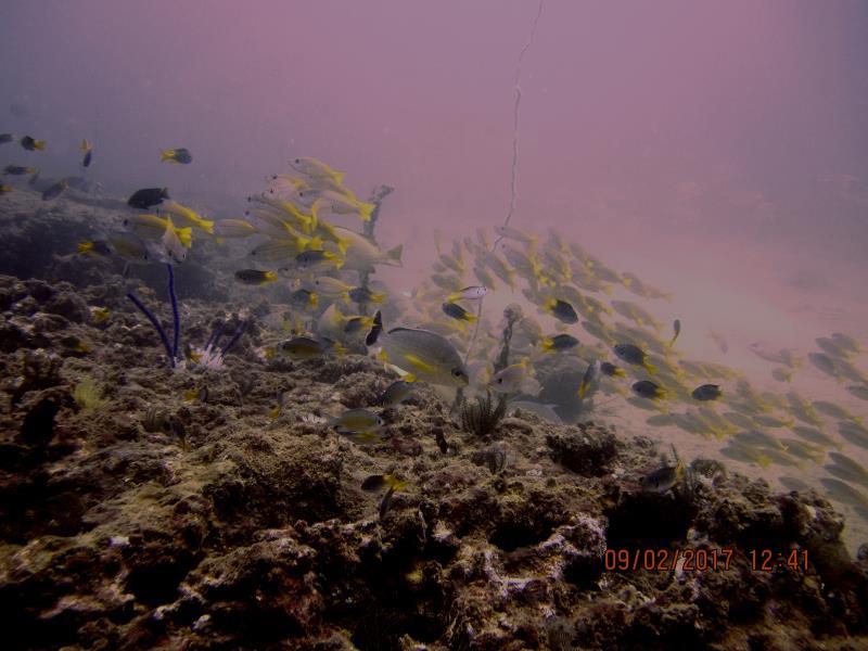 fish yellow lots