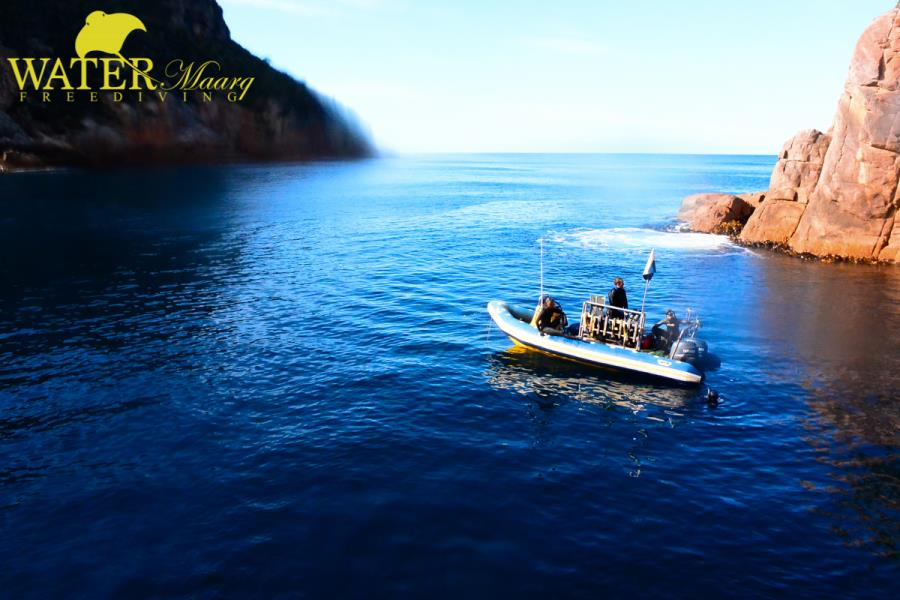 Freediving the Tasman Peninsula