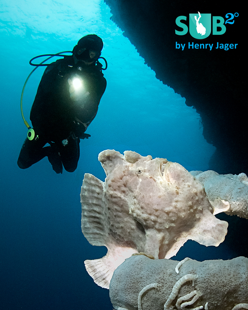 Frogfish and Diver