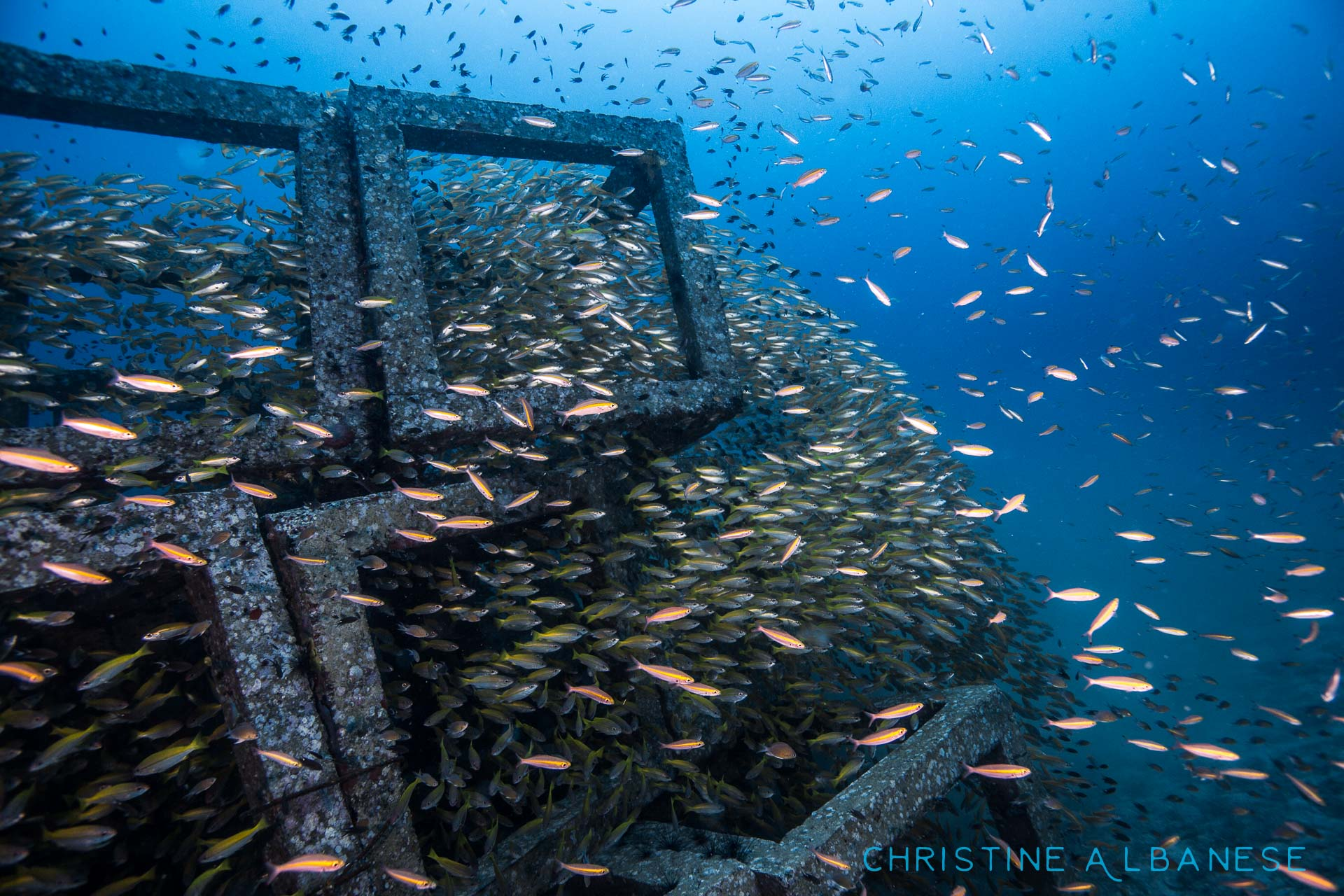 Fish explosion!! These concrete blocks were placed next to Sail Rock... They sit at around 30m and are completely covered in fish life. These act as fantastic artificial reefs :)   #underwater #underwaterphotography #uwphotography #EarthCapture #padi #wideangle #canon6d #canon1740 #ikelite #ds160 #scuba #scubadiving #adventure #sailrock #kohtao #thailand #divinglife #abundance #explosion #lovemyjob