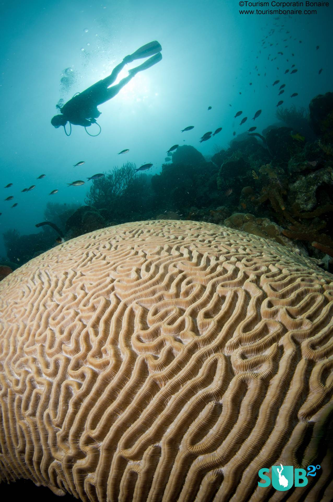 Giant Hard Corals Dominate at the Marine Park