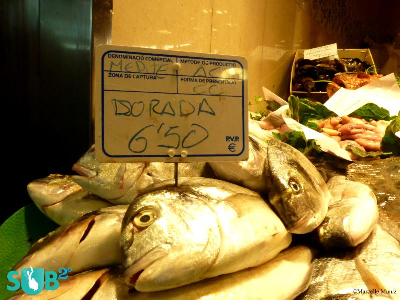 Gilthead Sea Bream Sold in the Market