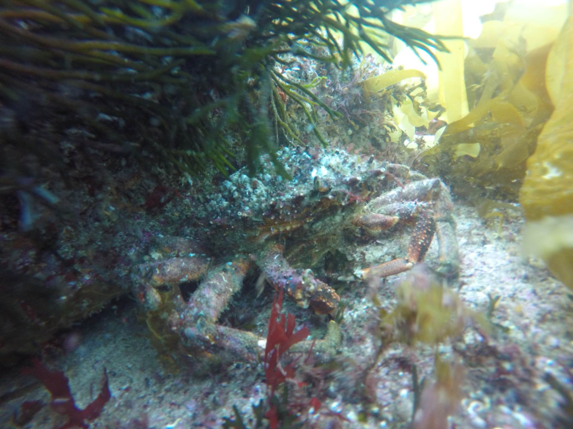 Underwater live