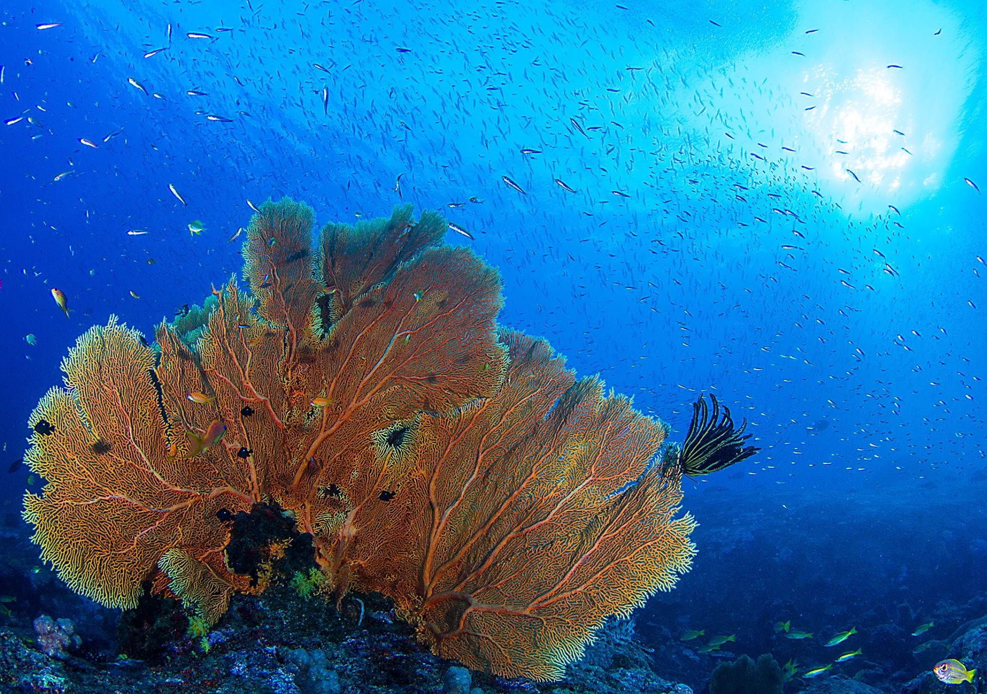 Amazing reefscapes to be had in the Andaman sea, especially at the not so much visited dive sites of Myanmar!