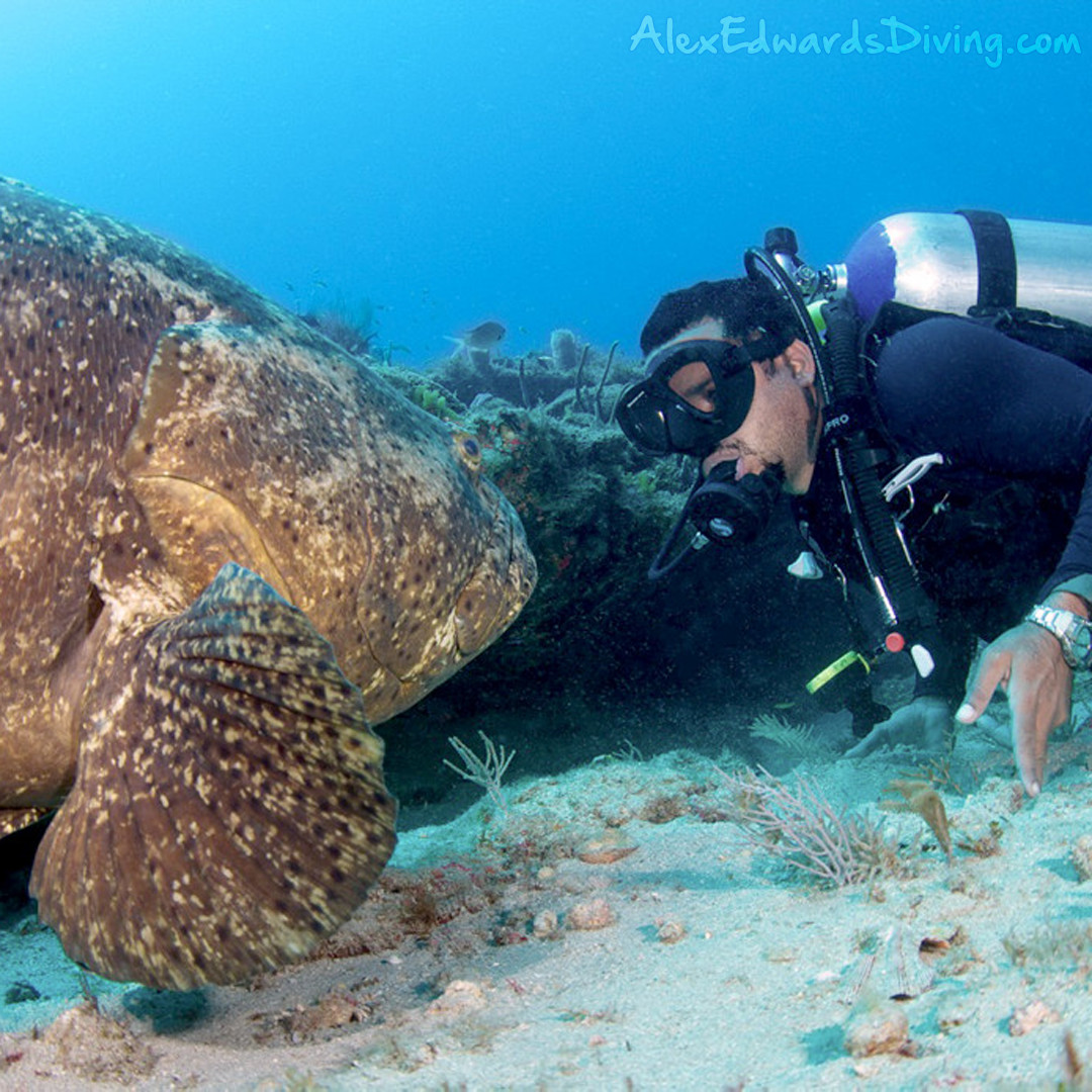 Grouper and Alex Edwards at Shark Canyon in Palm Beach county. Photo by Dennis Whitestone