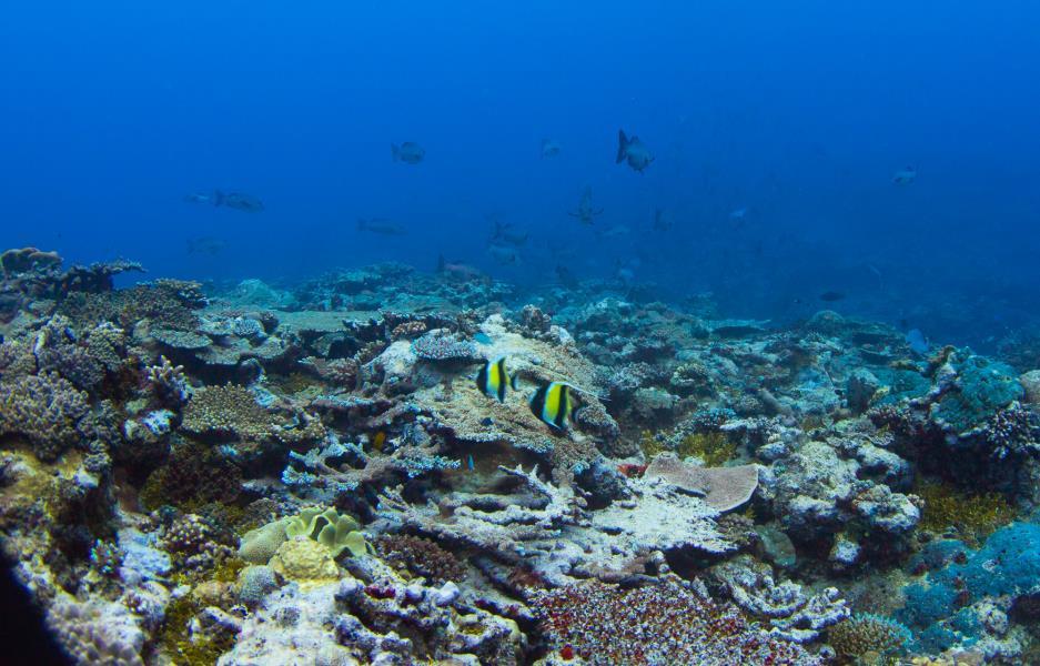Hard Coral Slopes
