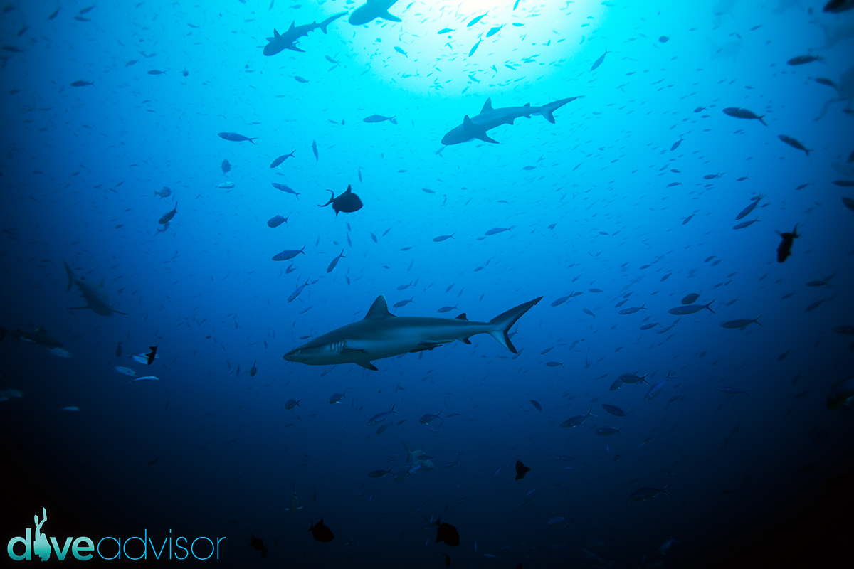 This dive site never fails to amaze me. The action is like an aquarium, literally.
