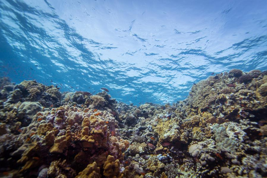 House reef moments