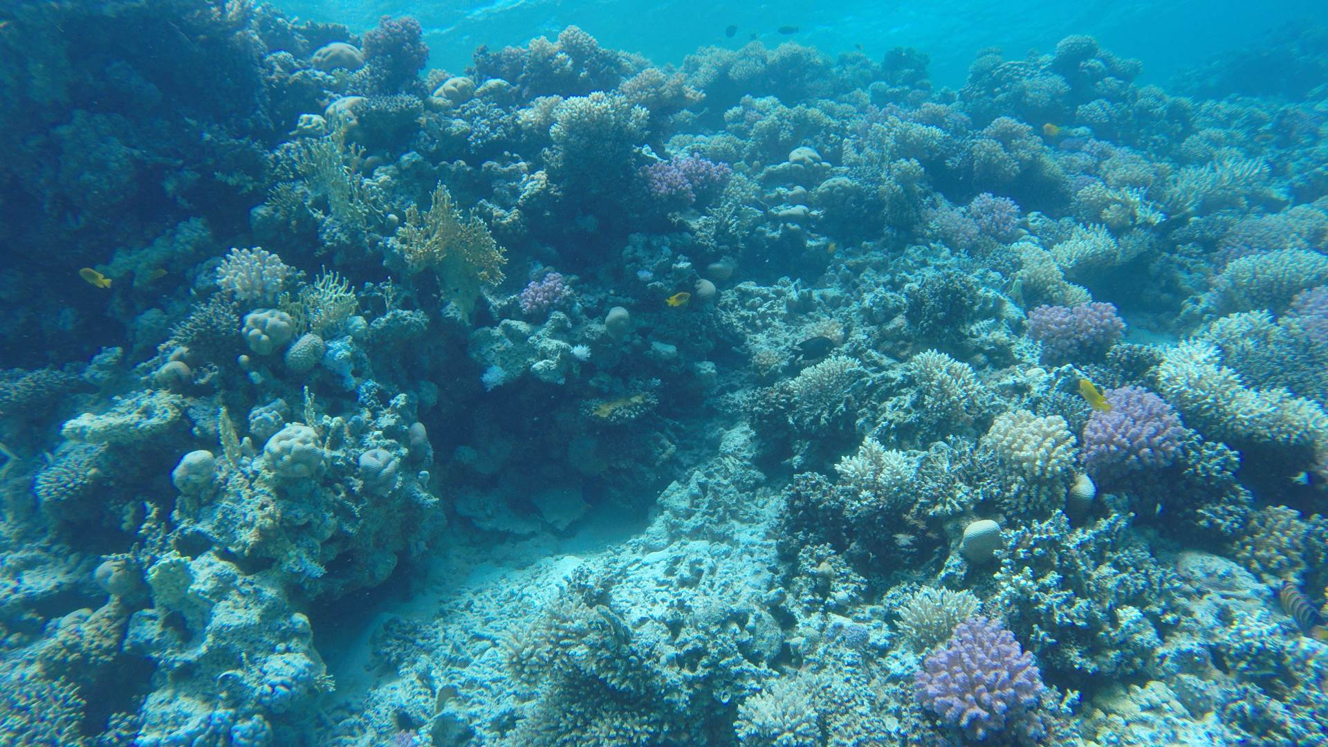 Discover of fascinating reef life of Hurghada...