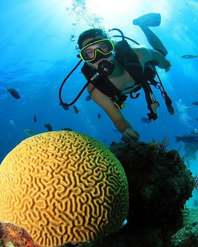 Posing between corals.
