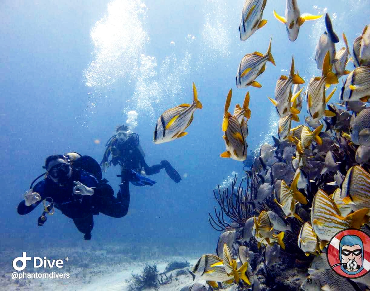 Picture of a classic day of 2 tank dive in  PLAYA DEL CARMEN REEFS