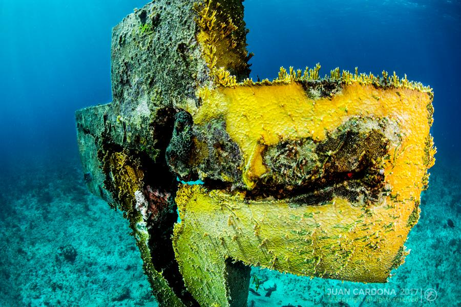 Isla Mujeres dive trips