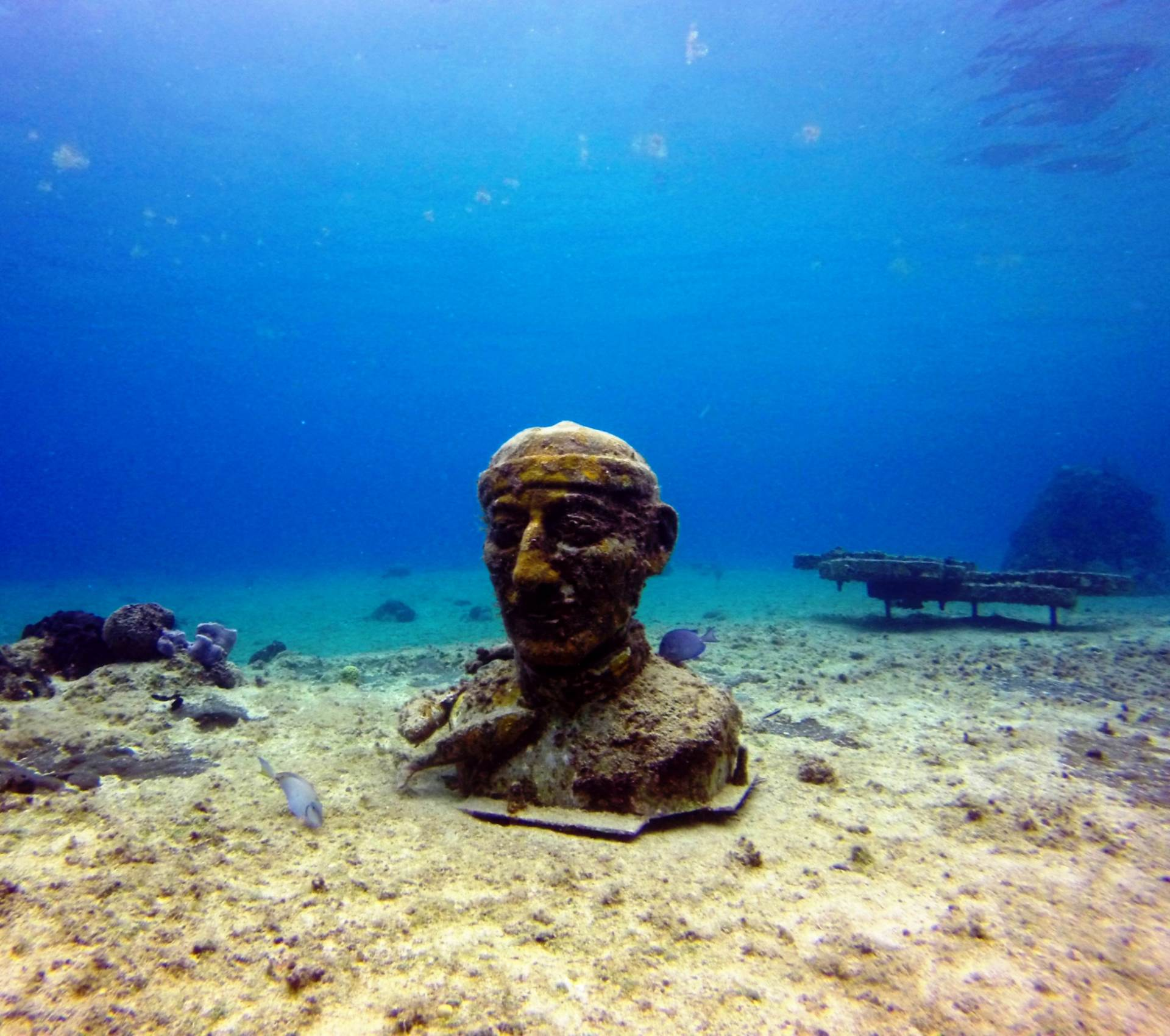 Named by Jacques Cousteau as one of the Top 10 dive spots in the world.   Come & Dive in Cozumel with us!   info@mapleleafscuba.com #MapleLeafScuba #Scuba #Cozumel #Mexico #PADI #Reef