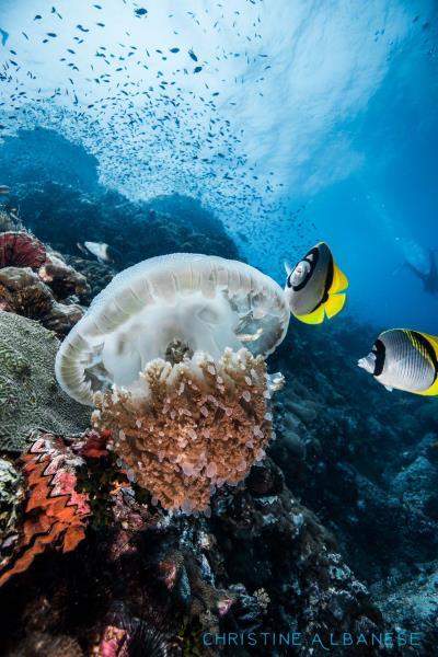 Jellyfish Buffet
