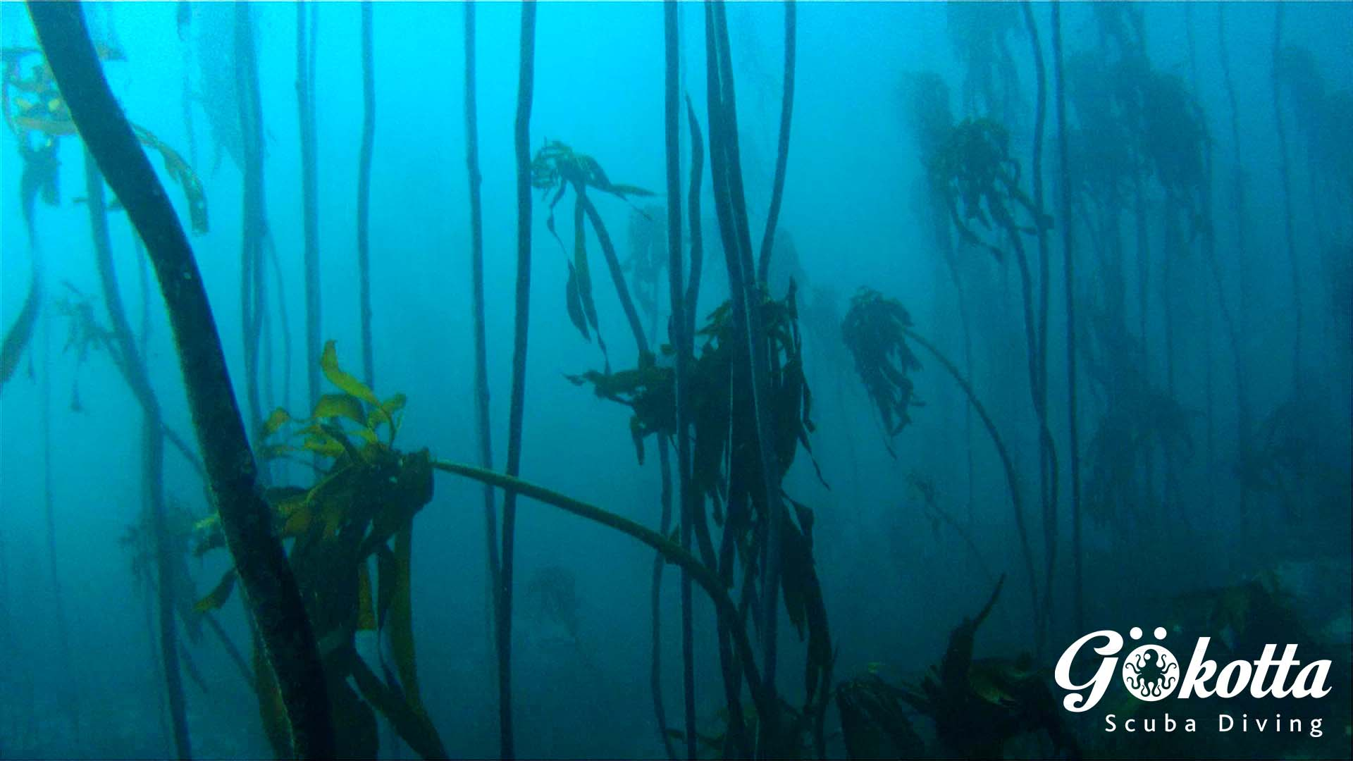 Magical kelp forests
