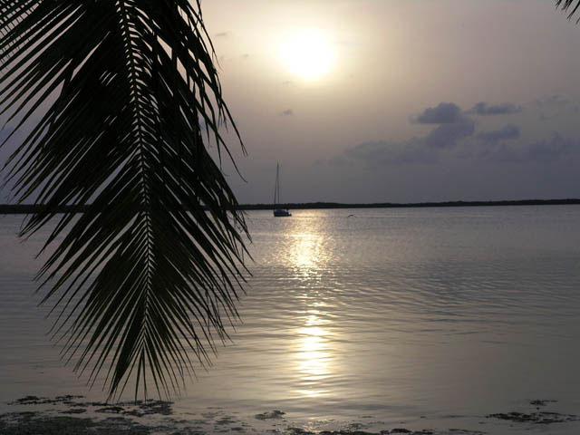 The Florida Keys are a Unique Tropical Environment!