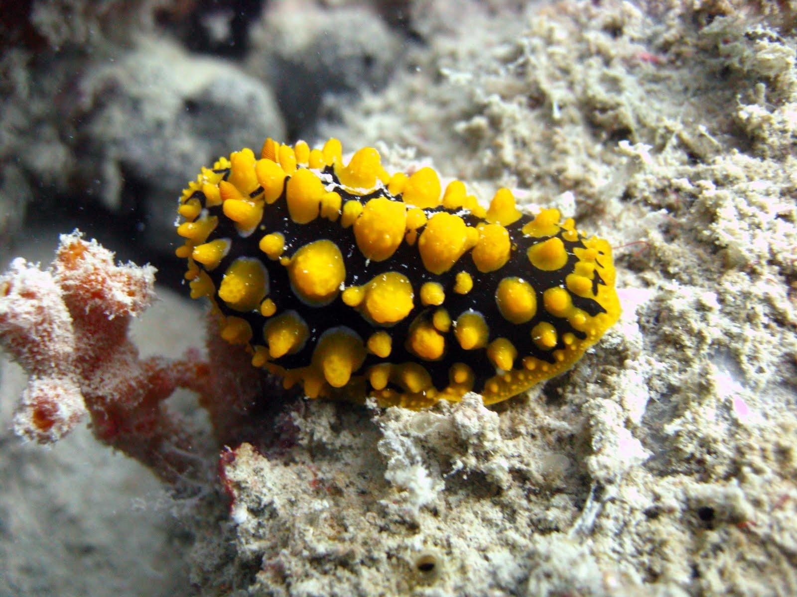 Koh Waeo - Merlin Divers Phuket