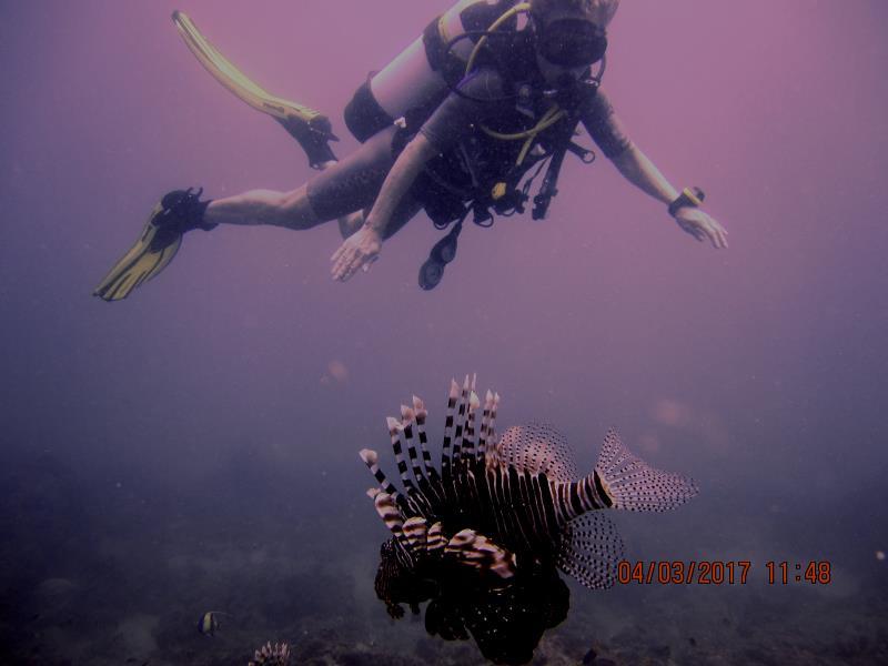 Lionfish Diver