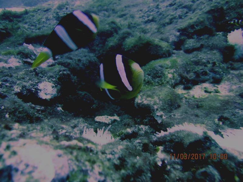 Little fish 1