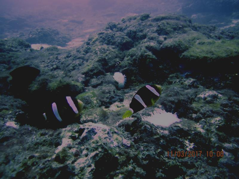 Little fish 2