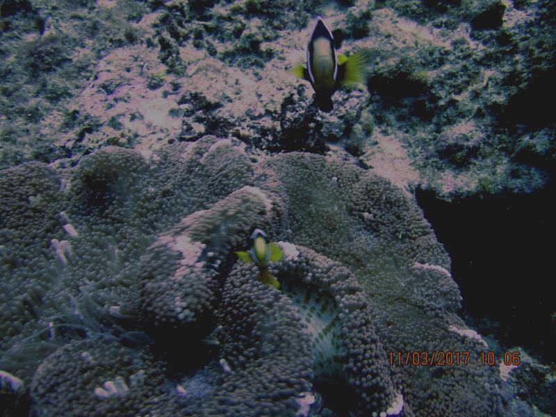 Little fish 3