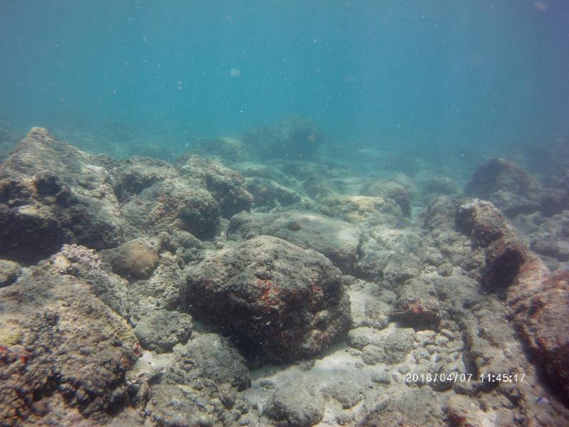Location for new coral growth found!