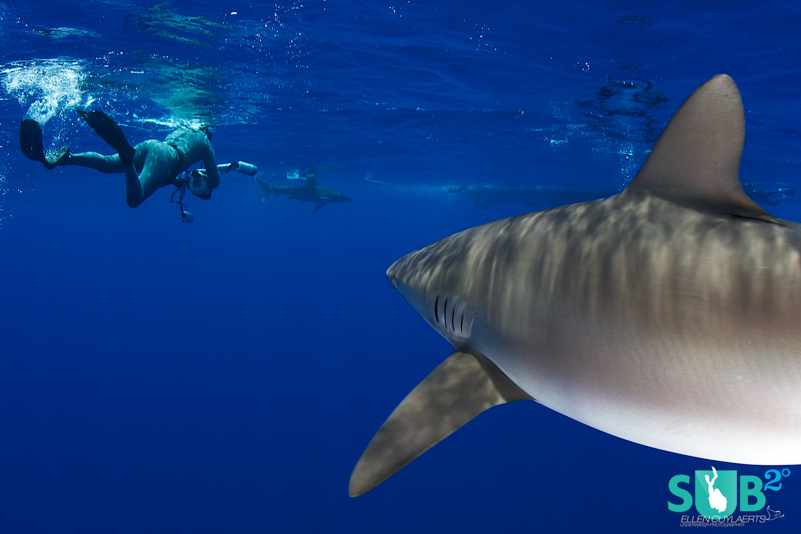 While concentrated on a shark in front of you, don't forget there are probably others around. To be aware of them at all times will keep your heart rate down.