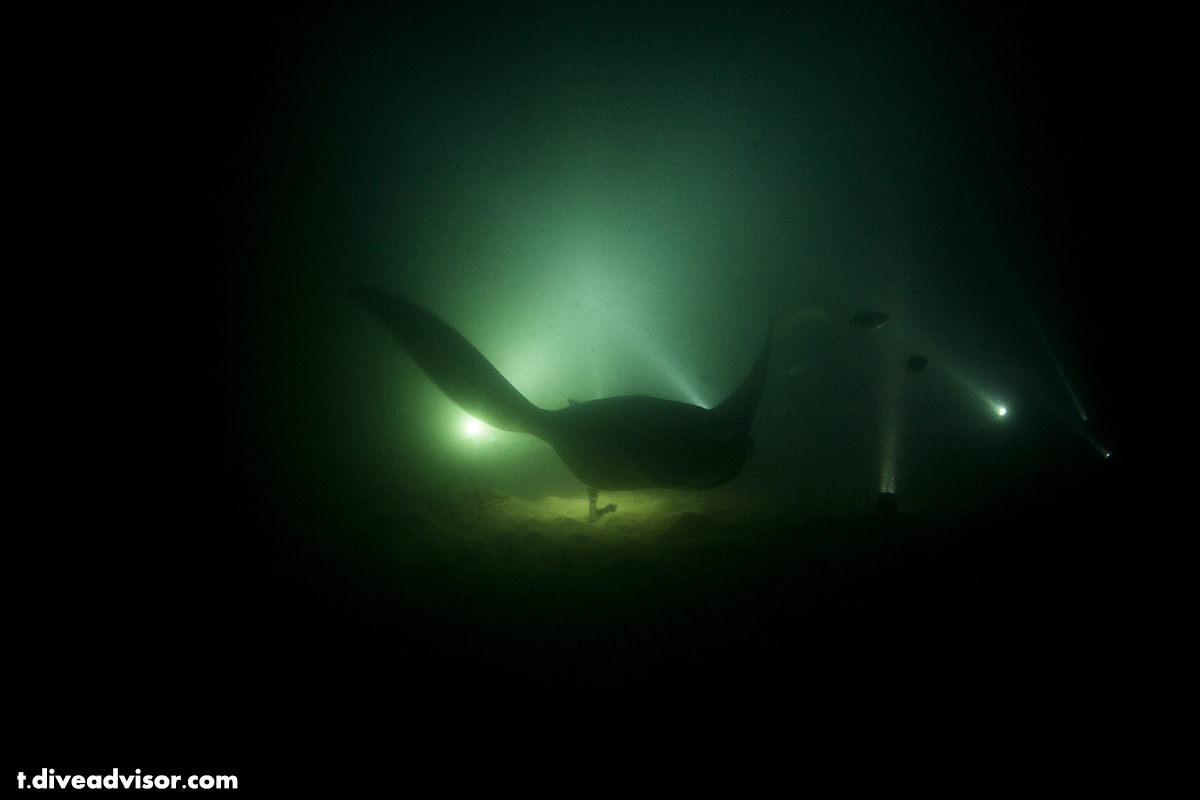 On this dive the mantas were in no rush to leave. Infact we left before they did :)
