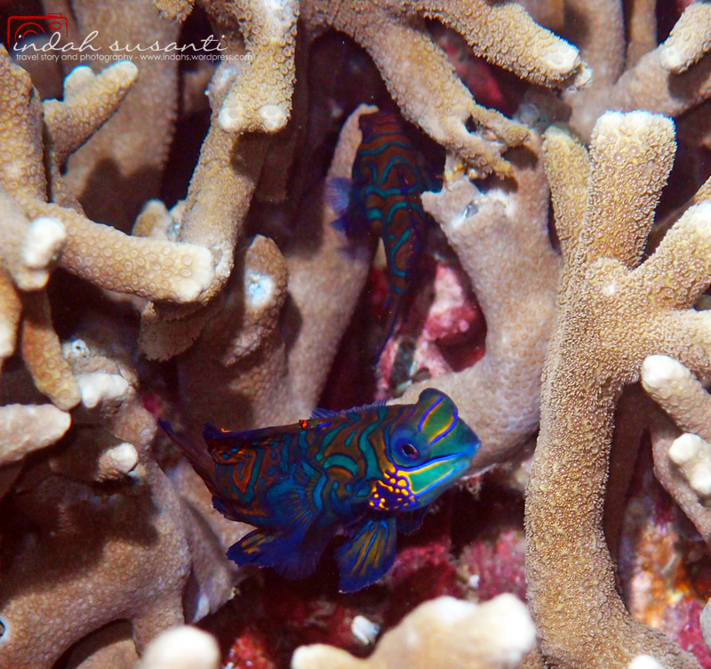 Taken in Lembeh Strait