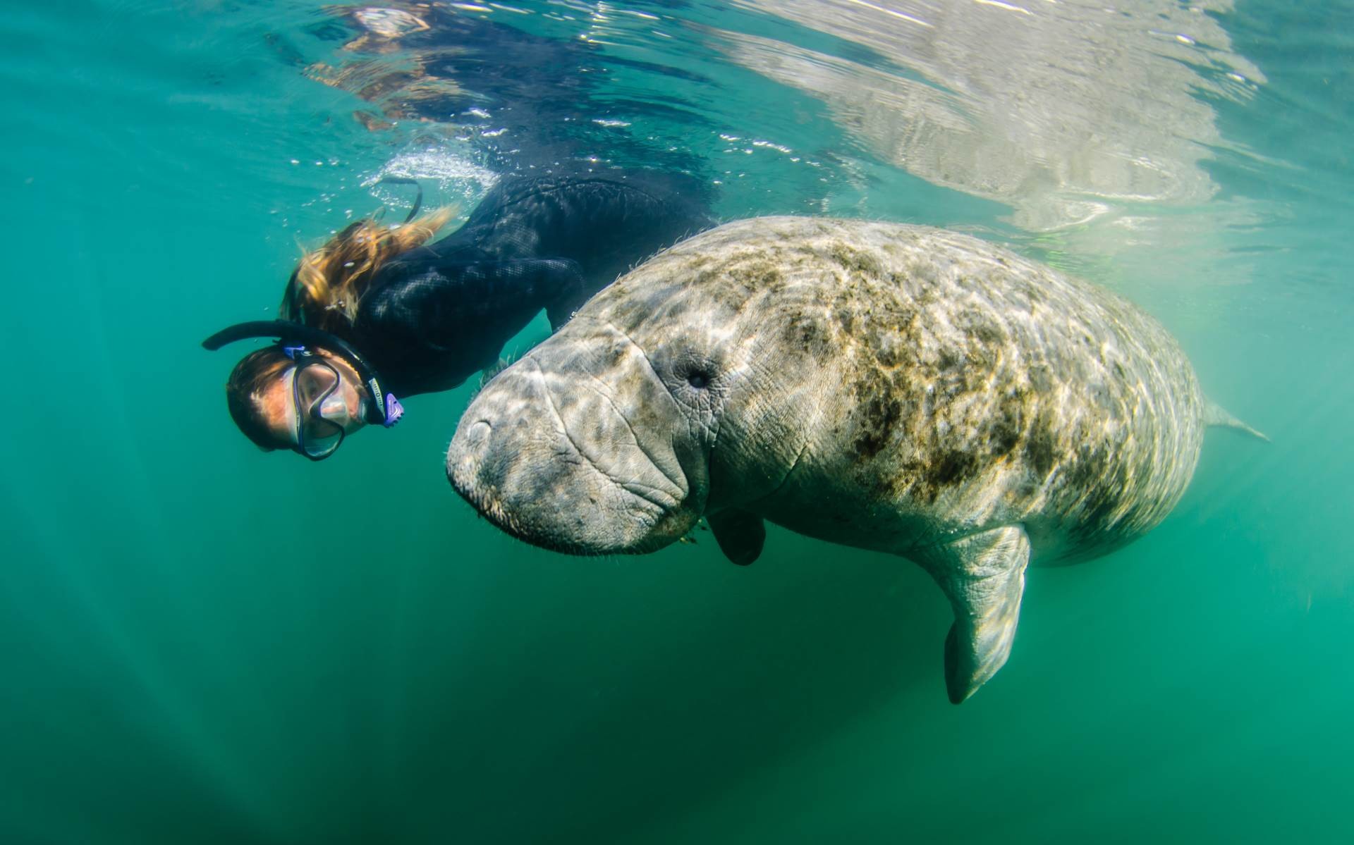 Interacting with manatees in Crystal River, Florida