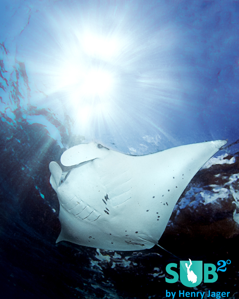 In Nusa Penida, you can observe the Mantas in shallow depths.
