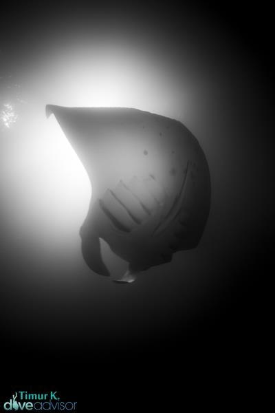 Manta Ray View from The Bottom