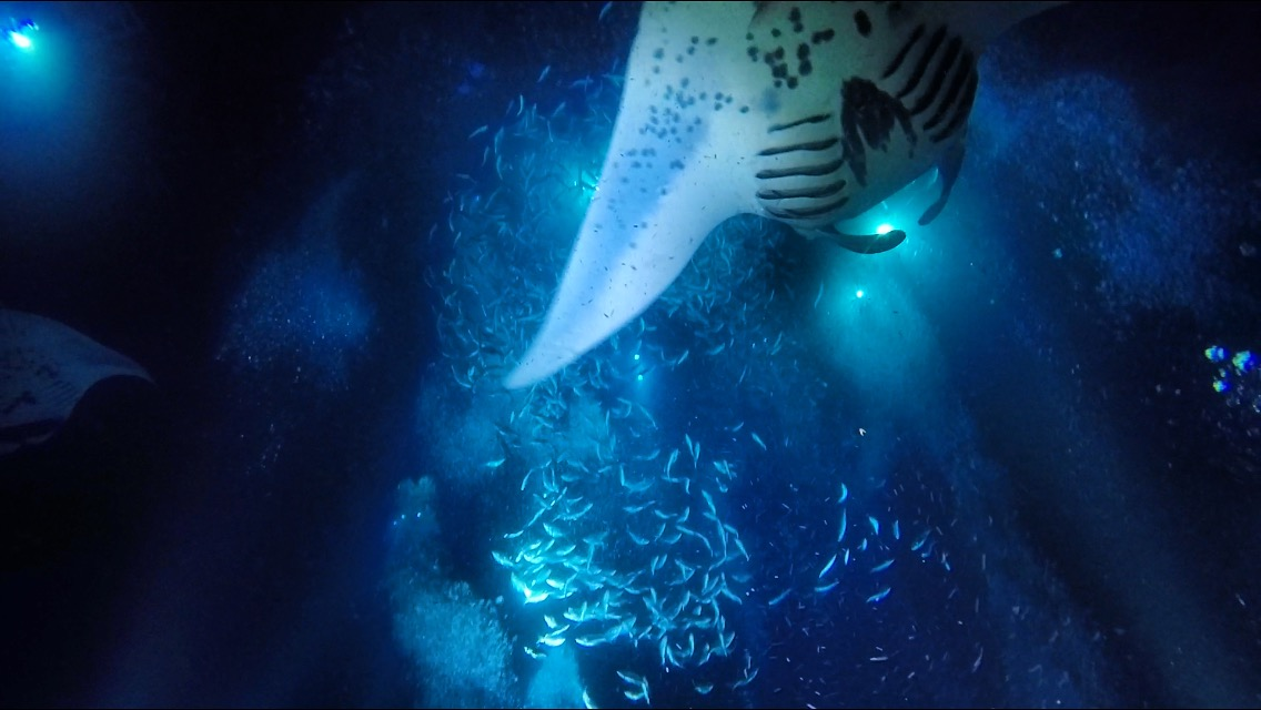 What a wonderful dive! Loved all the manta rays swooping around feeding on plankton. The plankton looked like stars in a blue ocean sky!