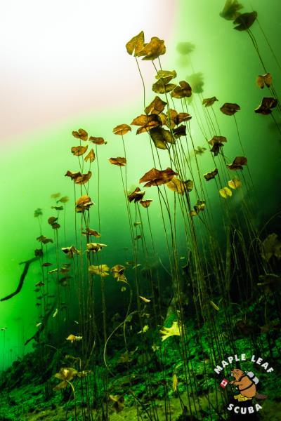 Maple Leaf Scuba-Cenotes-Yucatan-Mexico-4