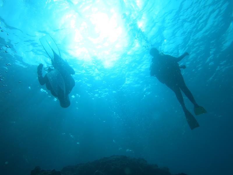 nemo diving in musandam
