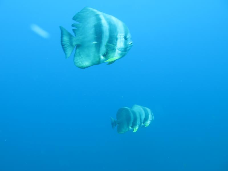 Nemo Diving Trips