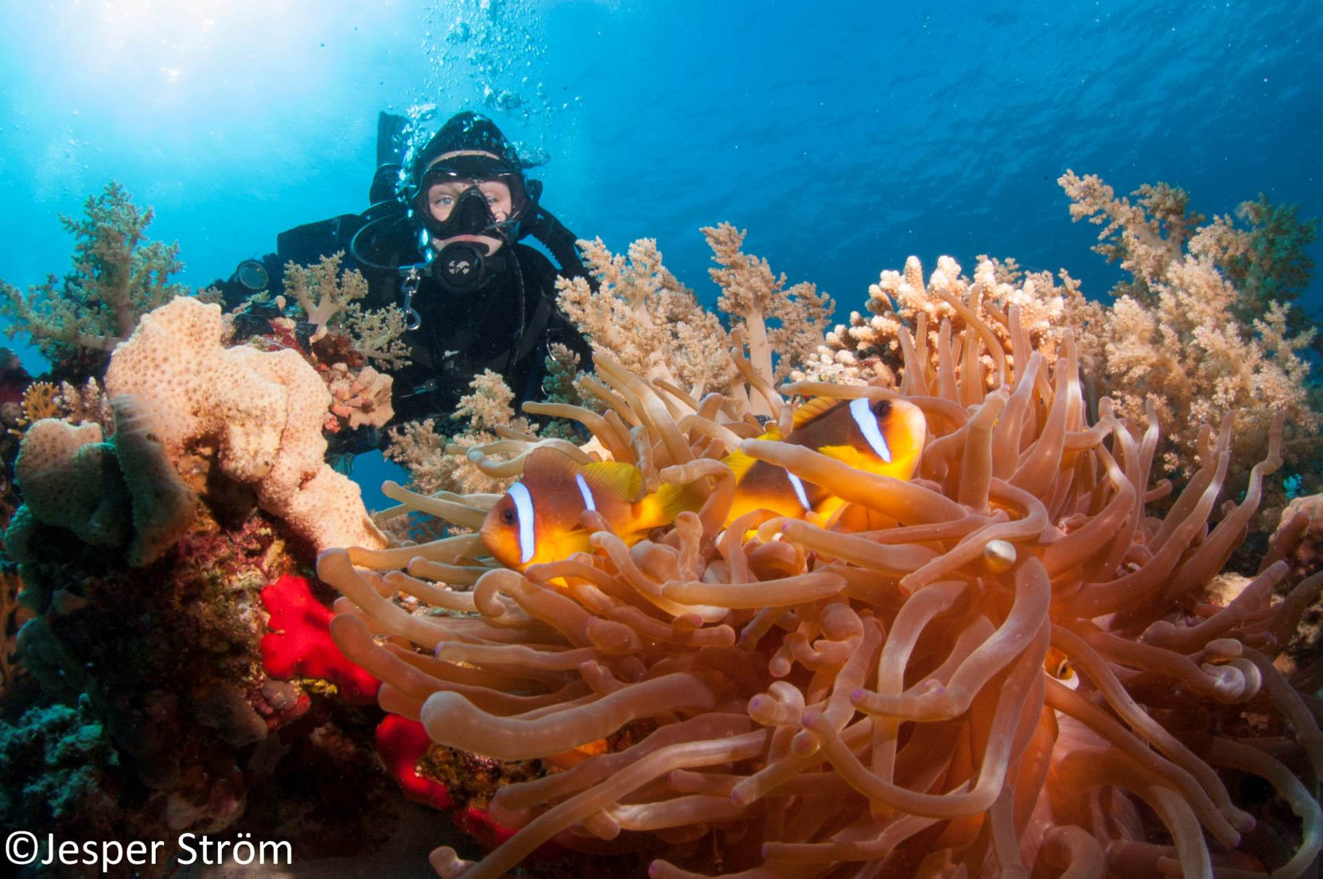 Clear blue waters, happy divers and happy clown fishes... Could it be better?!?