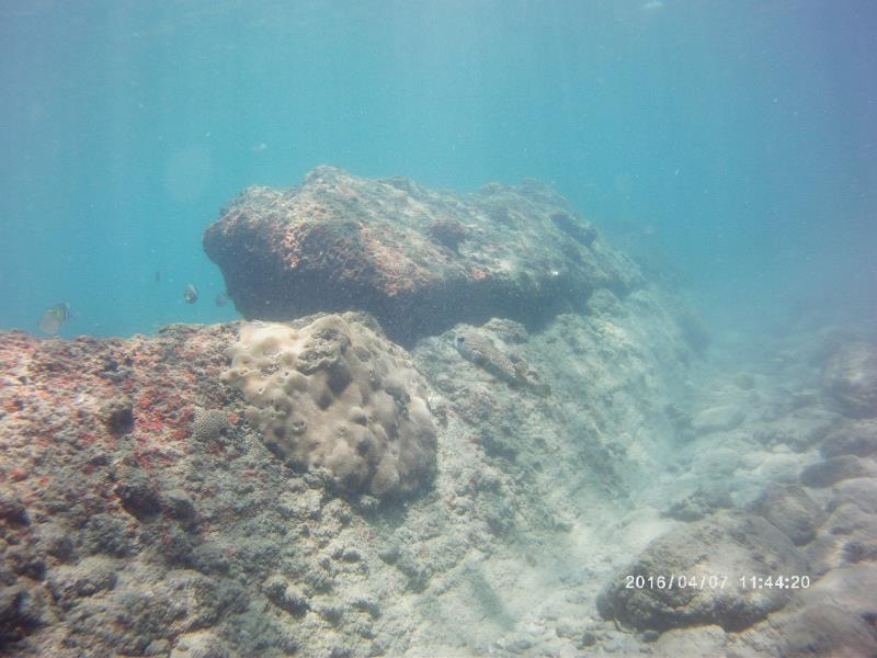 new coral rock