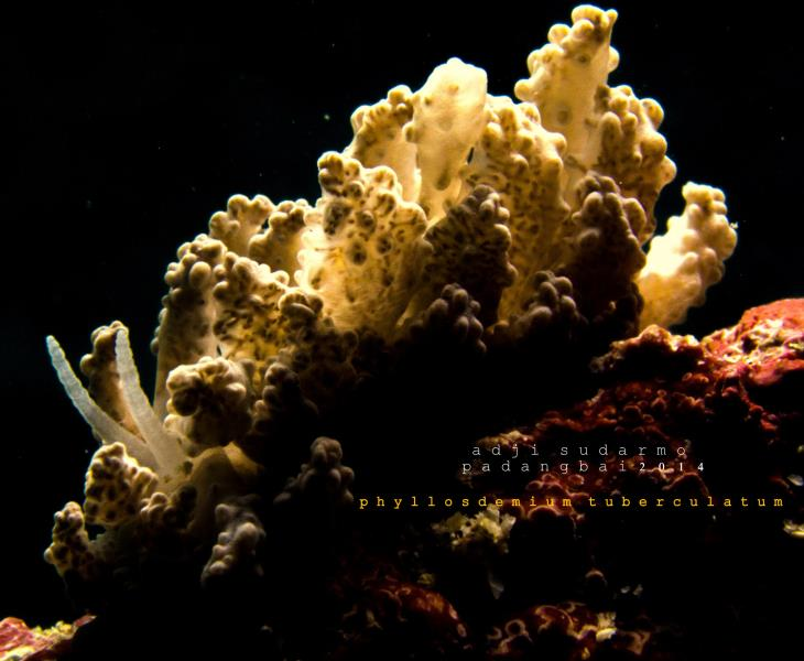 #nudibranch  #seaslug