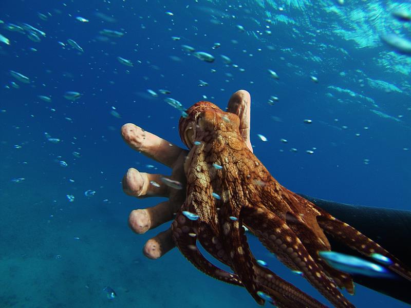 octopusfriend2