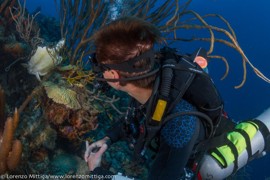 Our Training Director Checks out a Turtle in Bonaire
