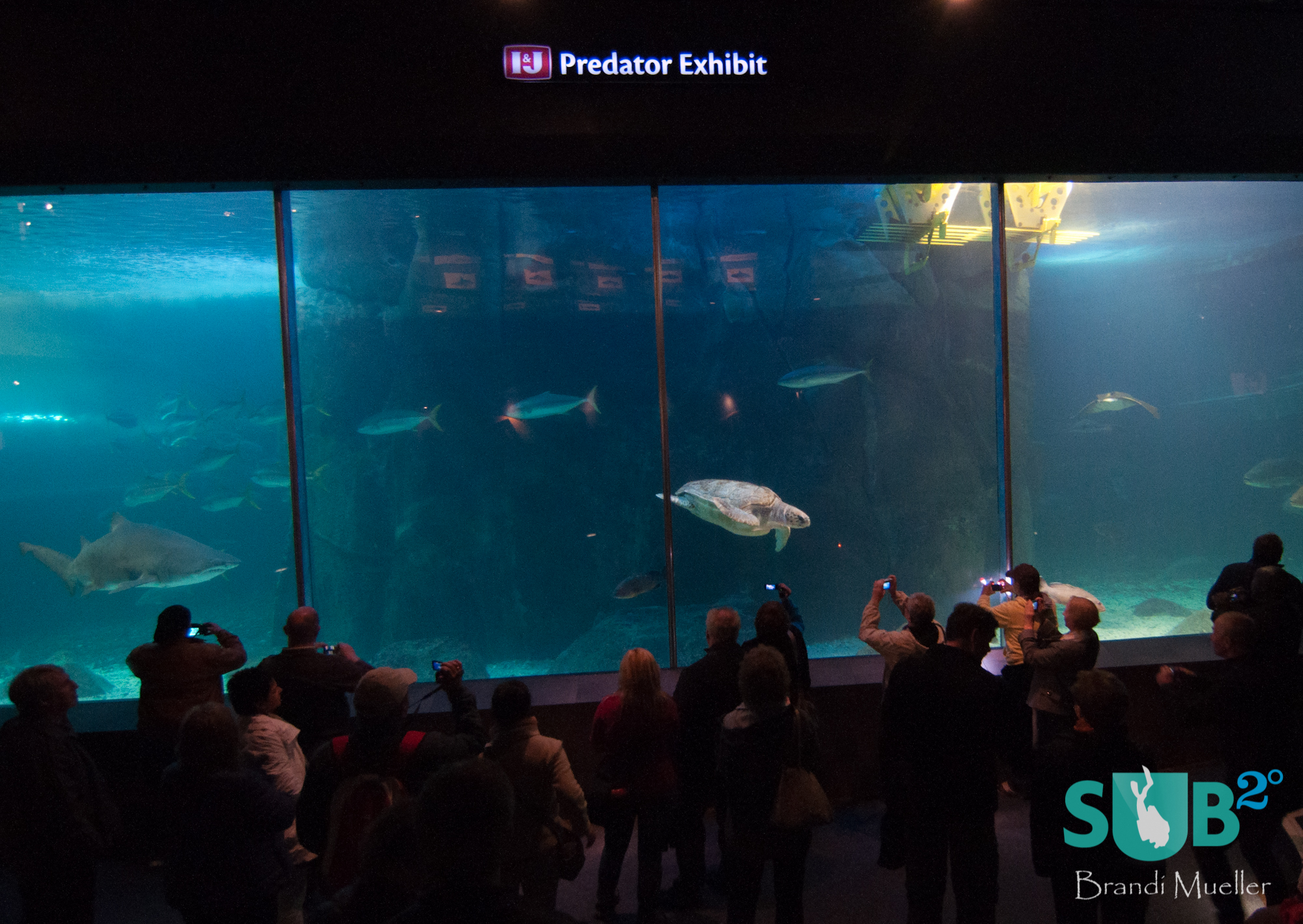 Visitors looking in at the Predator Exhibit at the Two Oceans Aquarium in Cape Town South Africa.