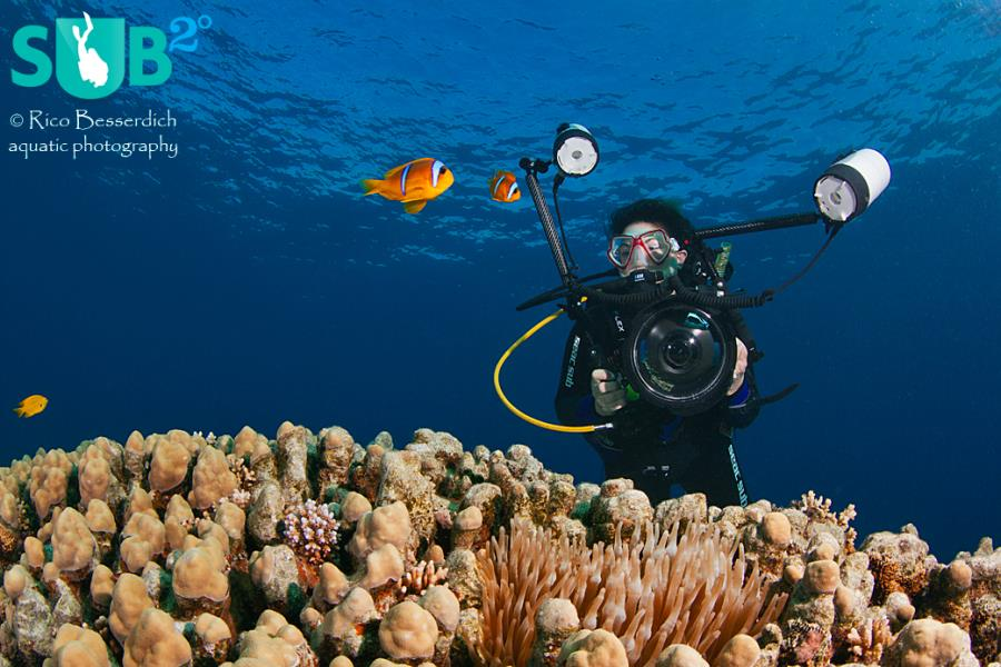 Photographer vs Anemone Fish