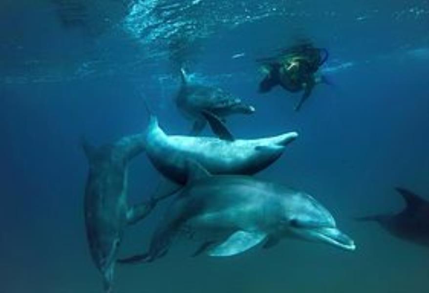 Ponta dolfins