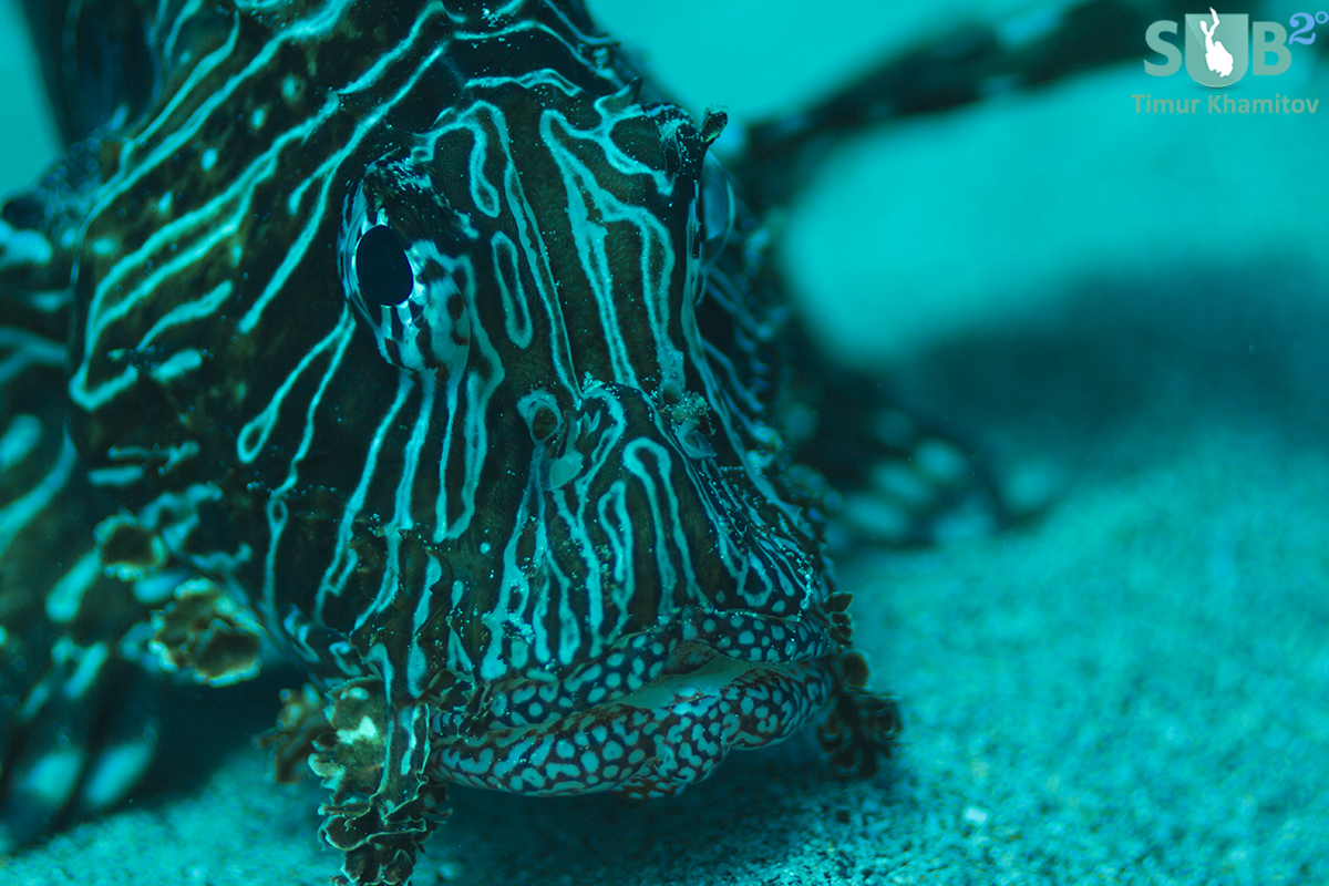 I had a real moment with this lion fish - taking plenty of pictures and video.
