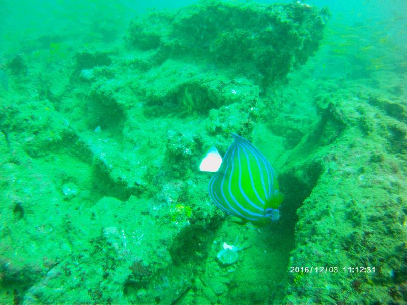 Pretty Fish 2