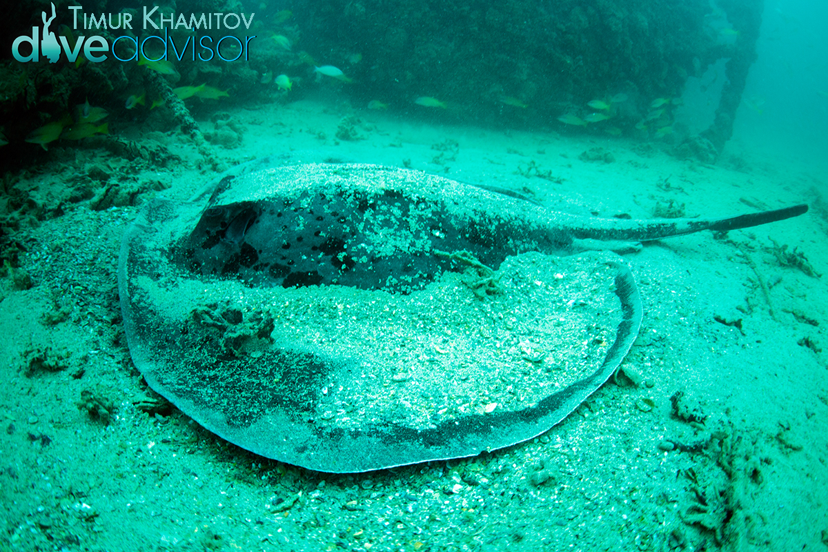 Found this awesome stingray around the side of the barge. Due to the fish eye effect it actually looks a lot smaller than it was in real life