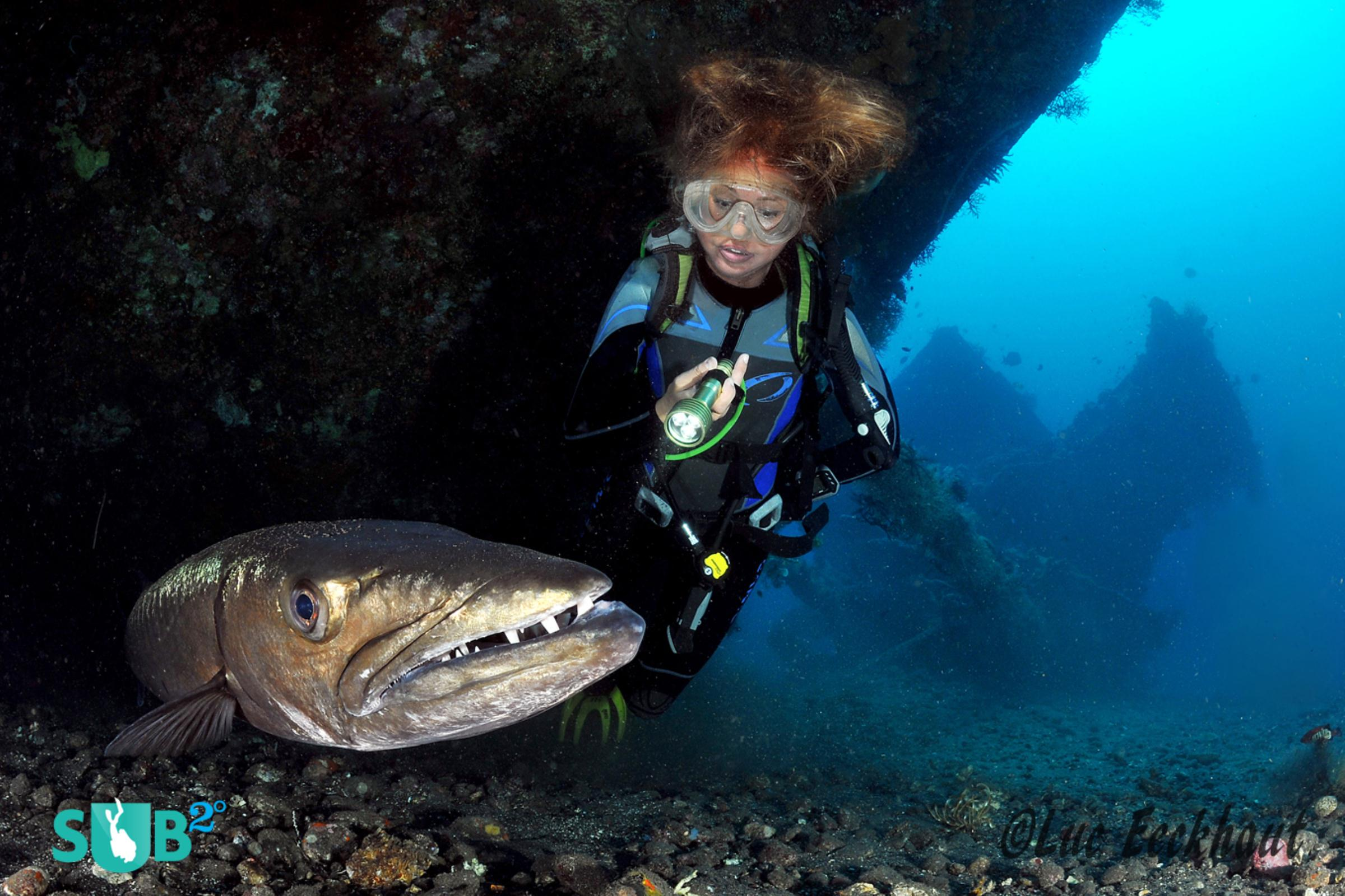 Sam, the Giant Barracuda, and Underwater Model